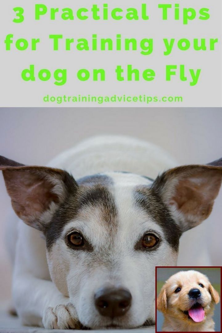 Dog Behavior Paw Up And Dog Training Classes Petco Reviews Dog
