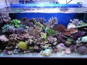 Acquario marino vs acquario di acqua dolce