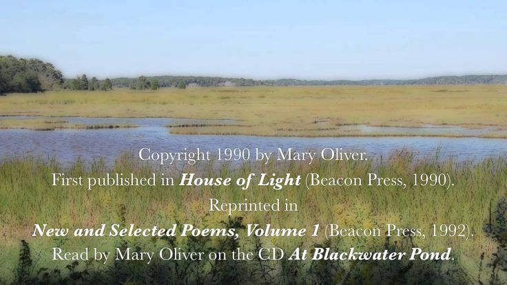 """Mary Oliver reads her poem, """"The Summer Day,"""" Copyright 1990."""