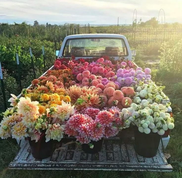 Floret Flower Farm, WA
