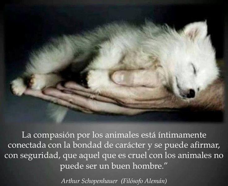 """""""La compasión por los animales está íntimamente conectada con la bondad de carácter, y se puede afirmar con seguridad que aquel que es cruel con los animales no puede ser un buen hombre."""" Arthur Schopenhauer."""