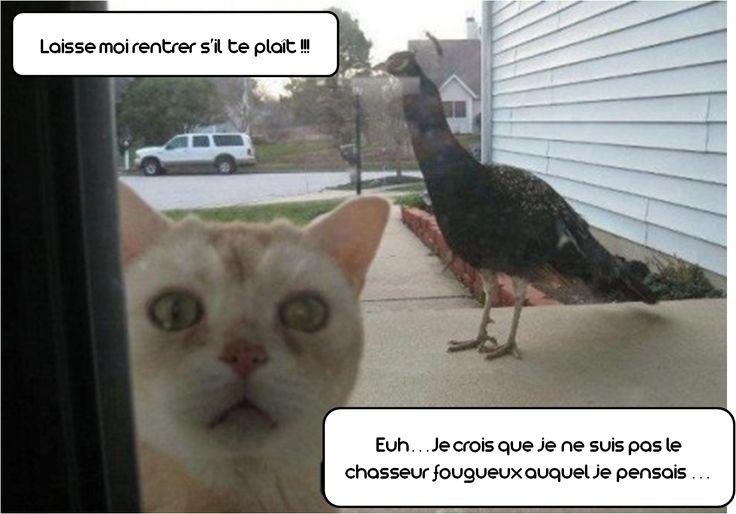 le #chat pas si #chasseur que chat by #zoomalia votre #animalerie en ligne
