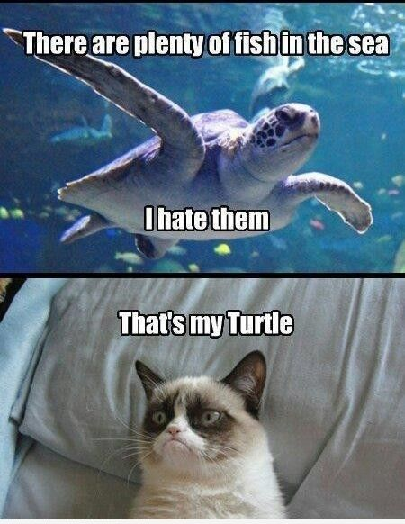 Grumpy cat is just too funny that s my turtle for Fish in the sea meme
