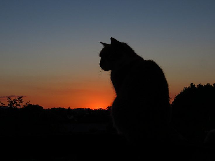Trooper - late Spring sunset 2013