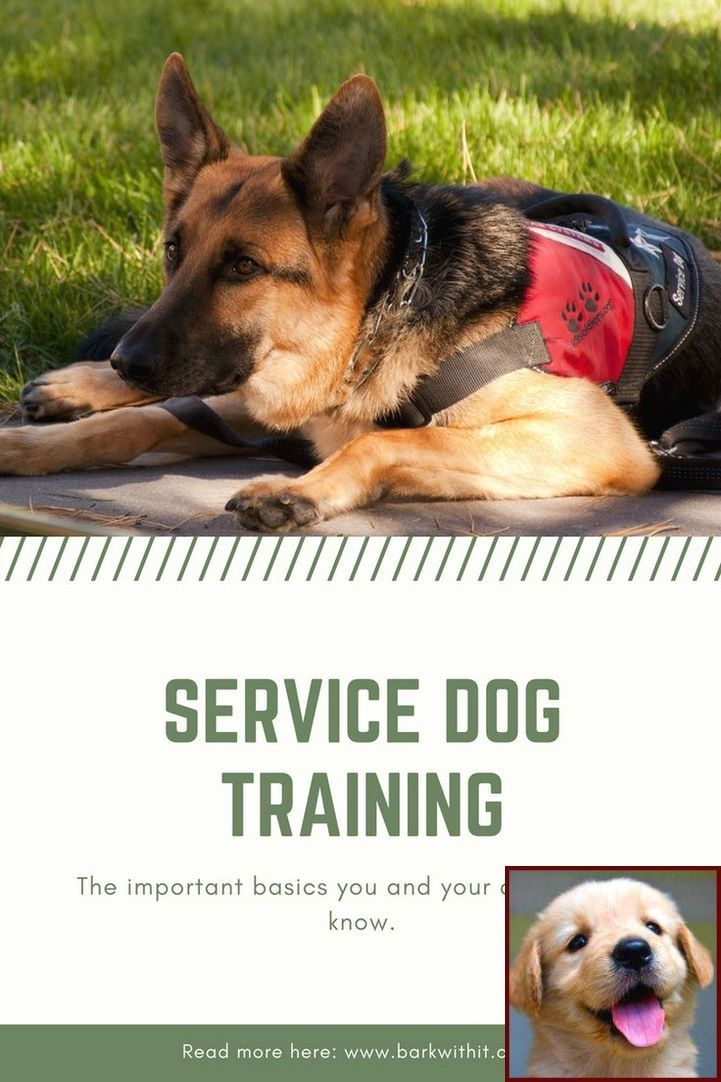 House Training A Puppy Schedule And Dog Training Courses Toronto
