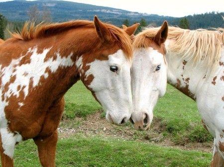 LOVE.: Picture, Beautiful Horses, Animals, Equine, Paint Horses, Horse Love, Photo, Friend
