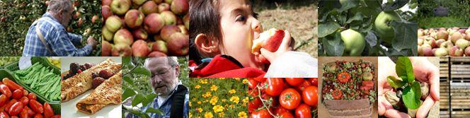Philips Fruittuin - Eindhoven  Fruit plukken in het seizoen   Pannenkoekenhuis  Kinderfeestjes  Doe dingen