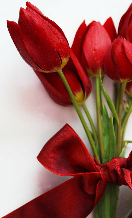 Welcome in spring with stunning red tulips! They're the symbol of perfect love!