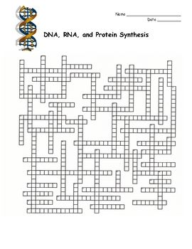 DNA, RNA, Protein Synthesis Crossword Puzzle.  This is a crossword puzzle that covers the topic of DNA, RNA, and protein synthesis. This could be used as a review for a test, as a homework assignment, as a classwork assignment or as a quiz.