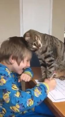 Viel Glück bei den Hausaufgaben   – Tiere