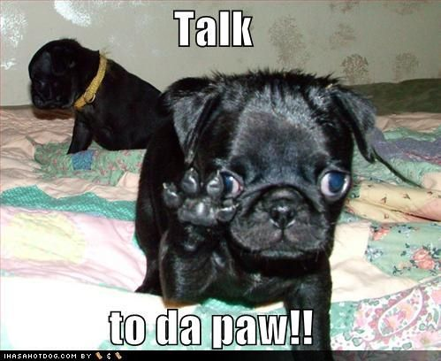 This Pug sez...Talk to da paw!