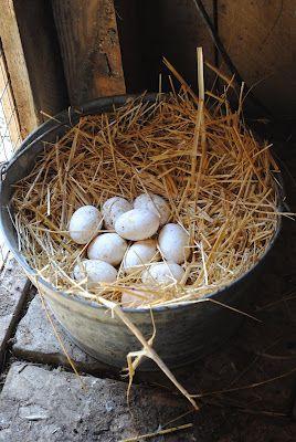 farm fresh eggs: Fresh Eggs, Country Living, Farms Eggs, Angry Birds Birthday, Farms Fresh, Farms Life, Country Life, Chicken Eggs, Birds Birthday Parties