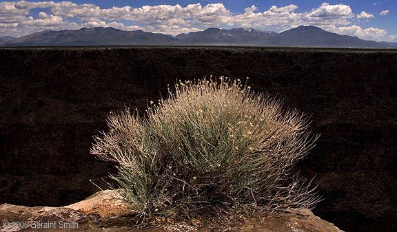 Geraint Smith:  'Gorge' bush ... a view across the Rio Grande Gorge and the Sangre de Cristo Mountains, Taos, NM