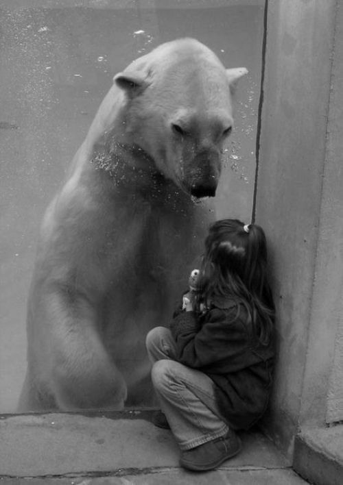 .Photos, Little Girls, Polar Bears, Glasses, Writing Prompts, Kids, The Zoos, New Friends, Animal