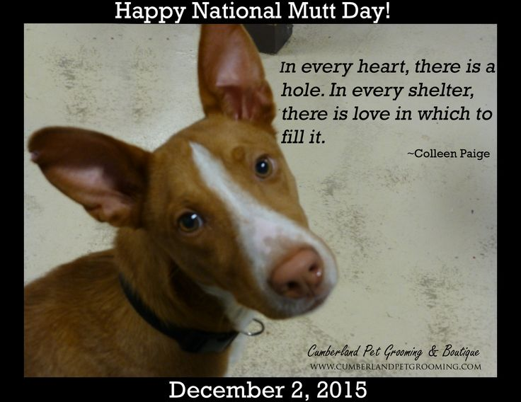 Happy National Mutt Day!! Who's the mutt in your life?? If