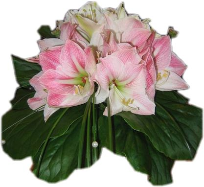 Virágcsokrok,Virágcsokrok,Virágcsokrok,Virágcsokrok,PNG virágok