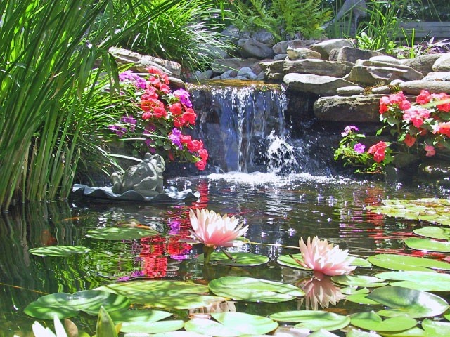 17 best images about koi pond on pinterest gardens for In ground koi pond