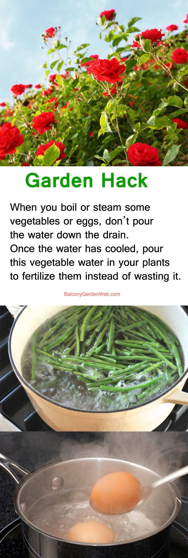 Garden Web Kitchen 17 Best Ideas About Gardening Hacks On Pinterest Gardening