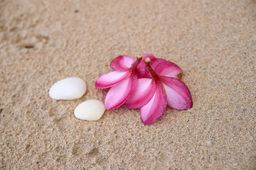 """Flowers and Cockleshells on Sand, From """"Caribbean"""" photo prints series, canvas and framed art photo print for interior."""