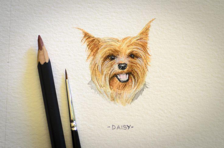 Daisy, miniature watercolour