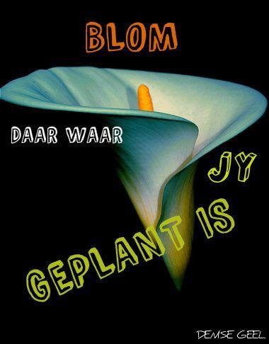 Follow vir nog afrikaanse woorde, liedjies, se goed en bybelversies =)