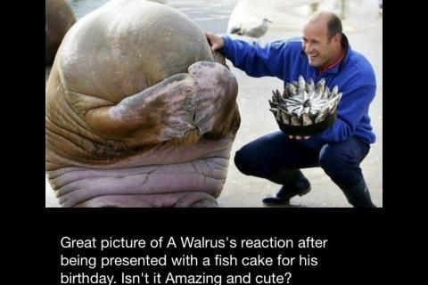 The gallery for --> Birthday Walrus