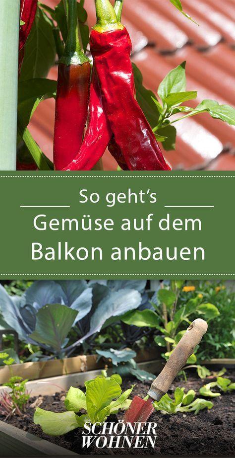 Auf dem Balkon wachsen Gemüse, Kräuter und Obst   – Balkon gärten