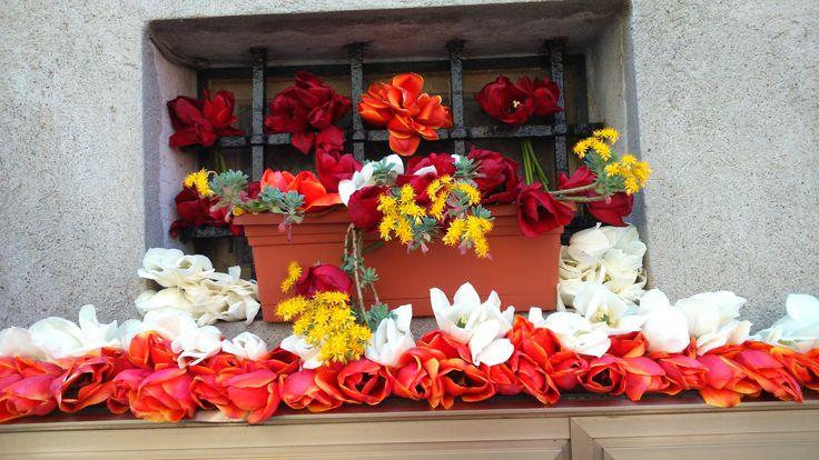 Tulipani rossi - Castigliopne del Lago (PG)