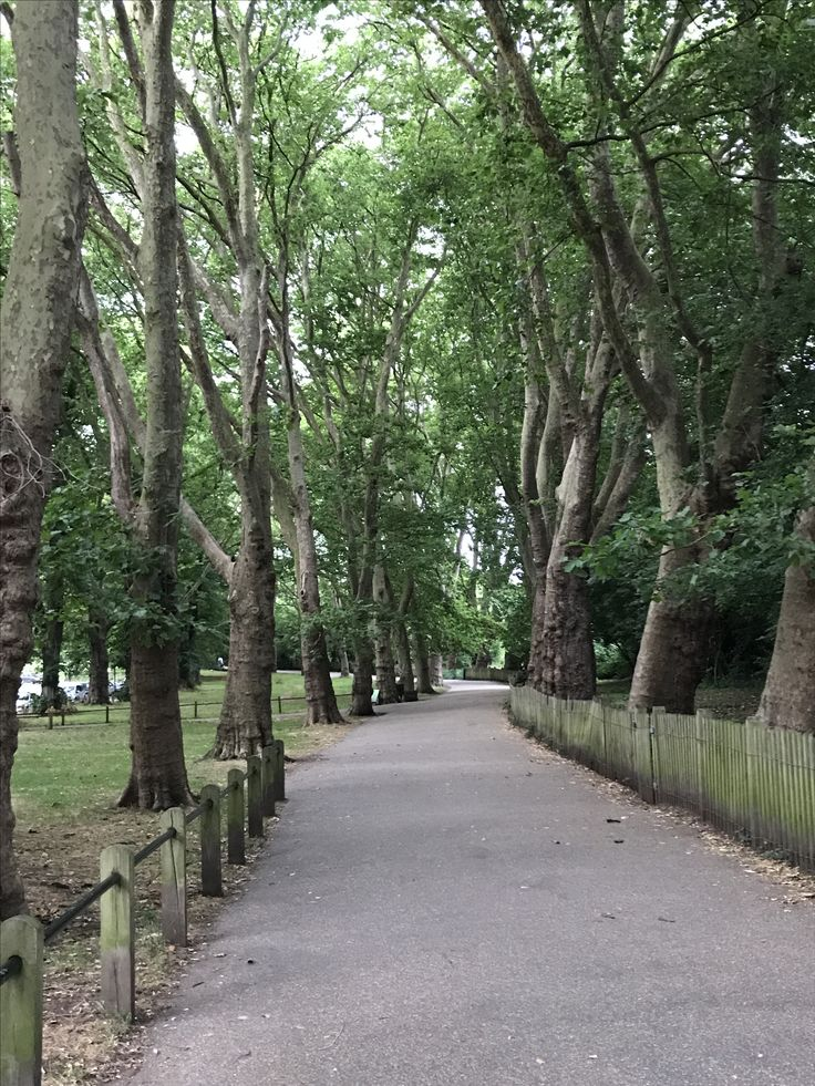 Another intriguing footpath on Hampstead Heath, this one from South End Green
