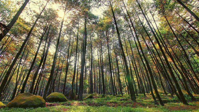 Tempat Wisata Alam Di Bogor Paling Terkenal Alam Indonesia Tempat