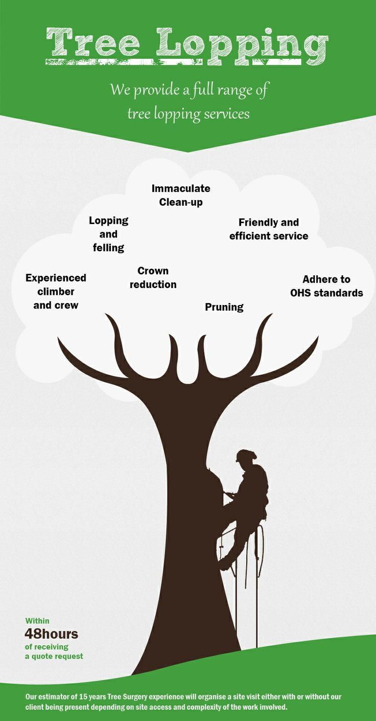 Performance Arboriculture is fully insured and use the latest equipment designed to handle just about any tricky situation. We handle tree removing services with the utmost professionalism. http://www.treelopper.com.au/tree-lopping/