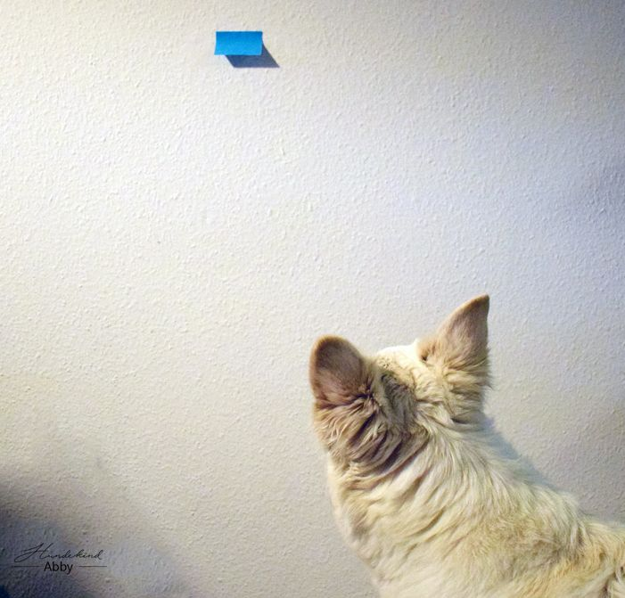 10 besten Hunde Bilder auf Pinterest | Hunde, Haustiere und ...