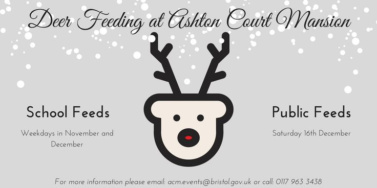 Deer Feeds in December!  Come and help Santa feed the Deer at Ashton Court Mansion #christmas #bristol #ashtoncourtmansion