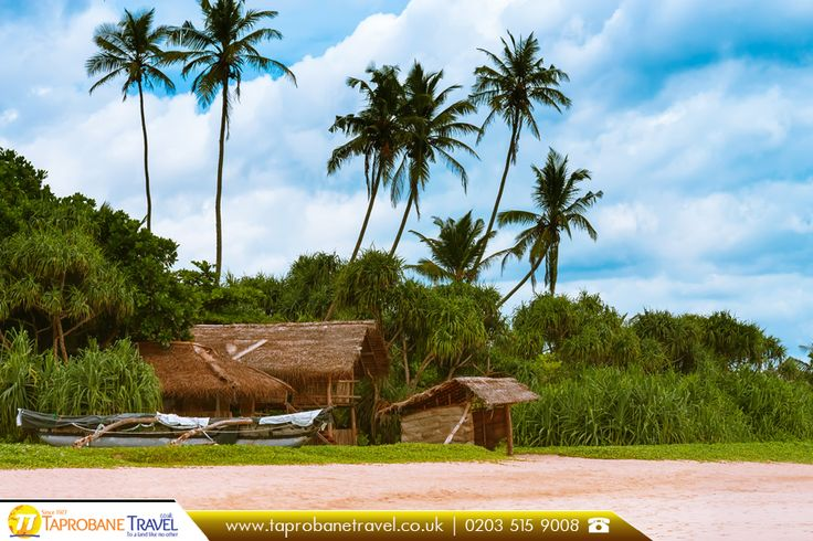 Hut of bamboo and fishing boats on the beautiful sandy beach, Galle, Srilanka   |   Book Now: https://www.cheapflightstoindiauk.co.uk/?utm_source=twitter&utm_campaign=sarkhej-roza-gujarat&utm_medium=social&utm_term=cheap-flights-to-india-uk  |    #beach #seashore #galle #flightstosrilanka #beautiful #travel #srilanka #traveller #travelsrilanka #travelbug #traveloffers #journey #happytravel #travelyear2016 #travelling