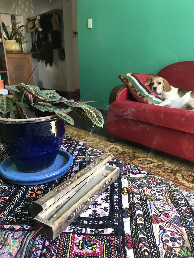 Beautiful Table Runner and Beagle #kutchembroidery #beagle #indoorplant #bohemiandecor #artdecocouch #bohemianlivingroom