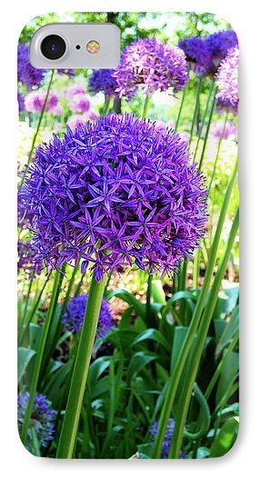 Allium Everywhere Phone Case for Sale by Leslie Montgomery.