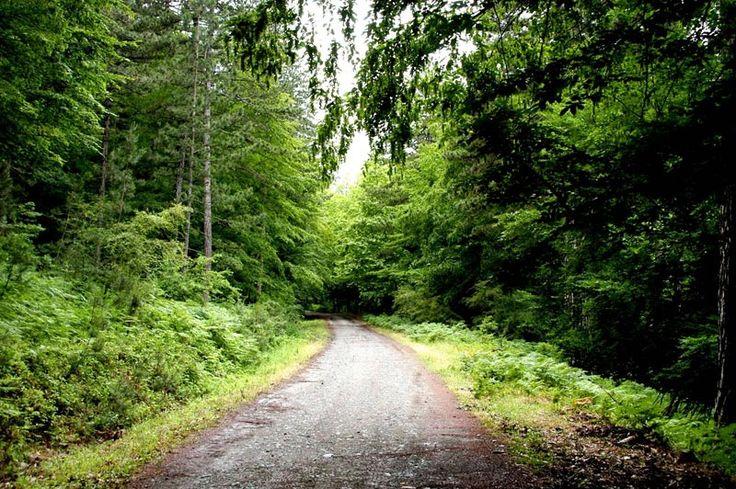 Kazdağı Milli Parkı Balıkesir ili, Edremit ilçesi sınırları içerisinde yer…