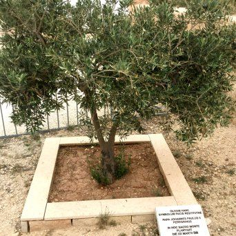 Viajes a Jordania - Monte Nebo lugar sagrado cristiano6