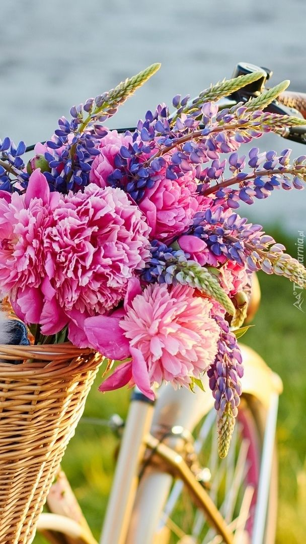 Lubin I Piwonie W Koszu Tapeta Na Telefon Flowers Wallpaper Plants