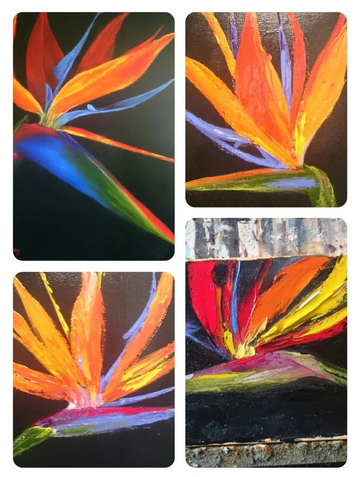 Birds of paradise/strelitzia paintings by Herma Kitching