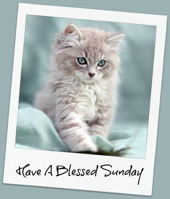 Risultati immagini per pictures sweet animals happy Sunday