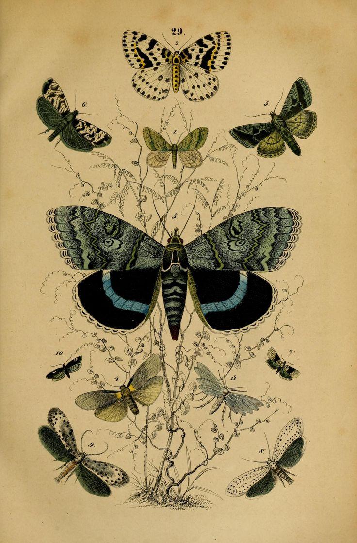 Handbuch der Naturgeschichte aller drei Reiche, fur Lehrer and Lernende, fur Schule und Haus.  Stuttgart,1850.  Biodiversitylibrary. Biodivlibrary. BHL. Biodiversity Heritage Library