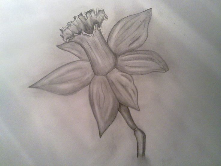 Flower Drawing In Pencil Hd Background 8 HD Wallpapers
