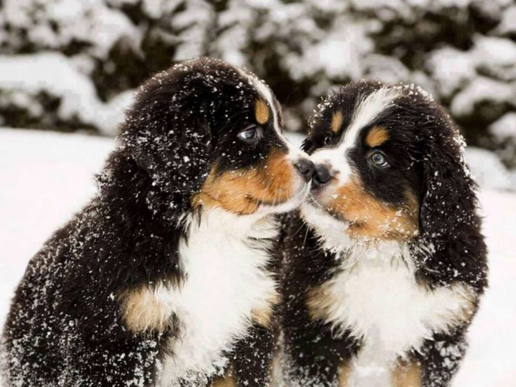 Bildresultat för hundraser