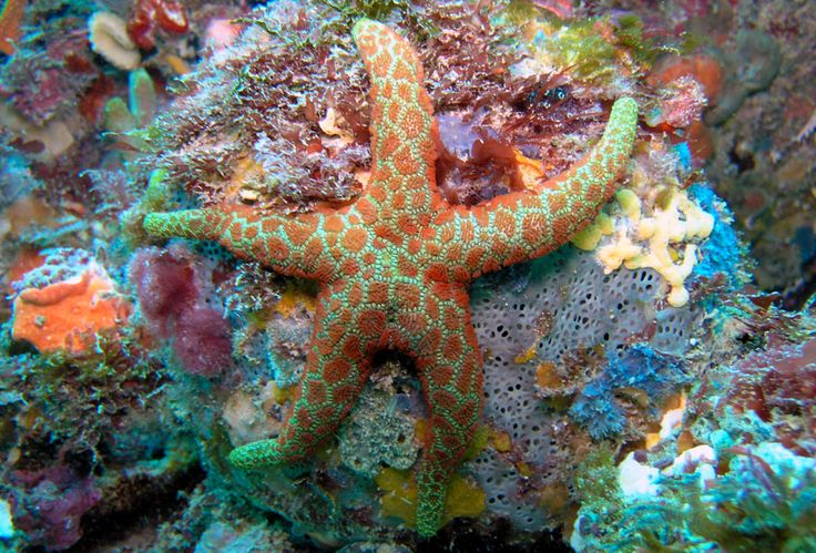 another starfish.. by ~leighd on deviantART