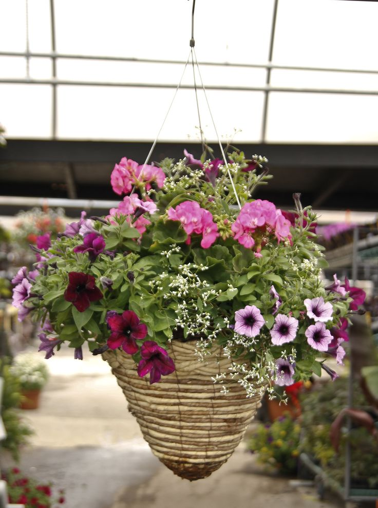 Hanging Flower Baskets Cone Shaped : Here s a staff favorite for hanging baskets this cone