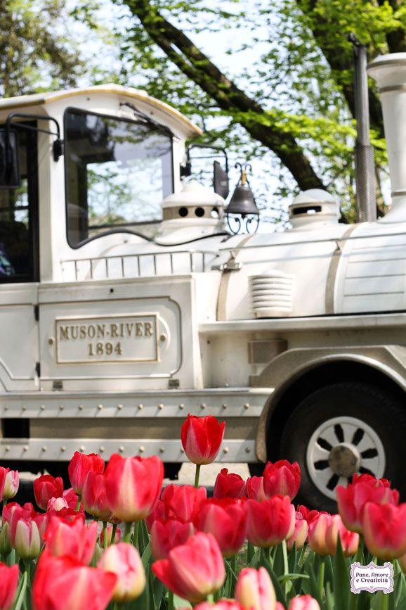 Tulipani e trenino #tulips
