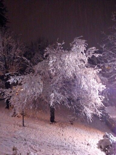 A Snowing Tree !!