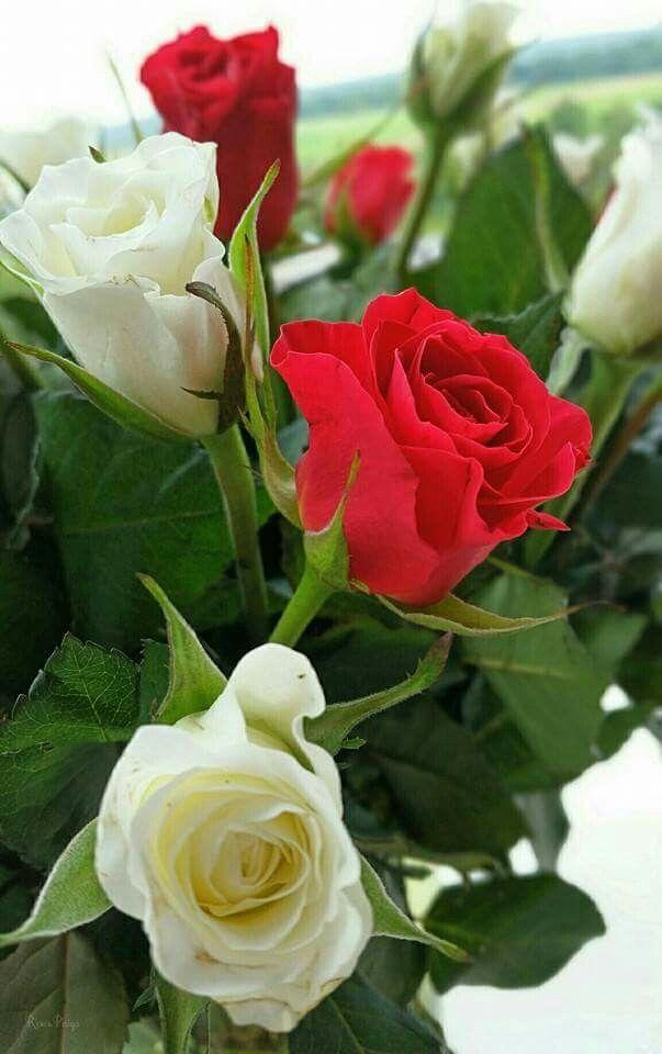 Z okazji Dnia Kobiet życzę miłego dnia.