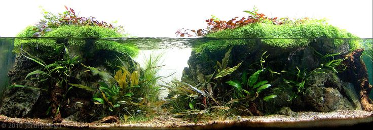 Aqua scaping biotope | ... , tropical fishes and plants: AGA Aquascaping Contest 2010 Results